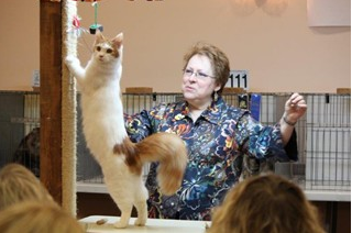 cat show arizona