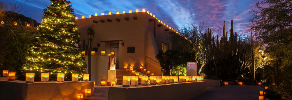View The Beautiful Night Lights At The Desert Botanical